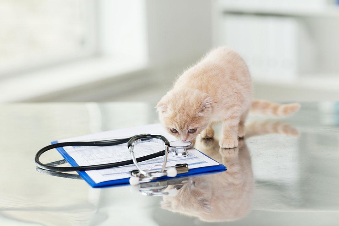 Leczenie zwierząt idziałania profilaktyczne